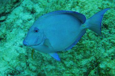 Canouan, The Tobago Cays & Mayreau